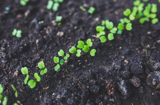 Mes 10 résolutions écologiques pour 2018