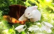 Des animaux autrefois maltraités photographiés façon Alice au pays des Merveilles