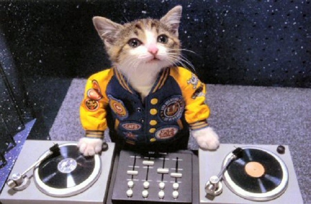 Les « Perlorian cats » ou les chatons des 80's en habits de lumière