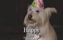 L'hommage en vidéo aux chiens de la télé