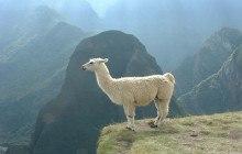 Mon voyage en Bolivie, entre beauté et pauvreté 1/2