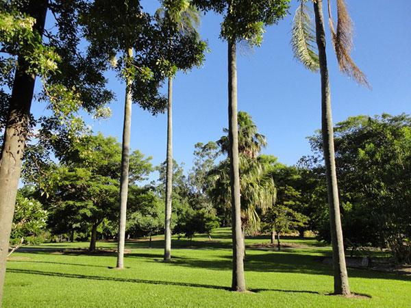 australie-brisbane-garden