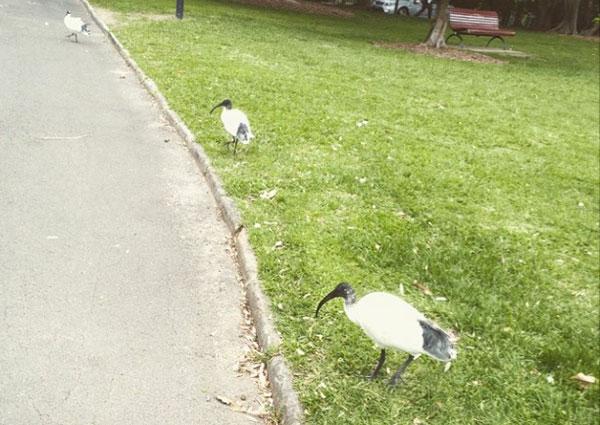 australie-sydney-ibis