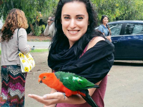 australie-road-perroquet-2