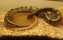 L'élevage de serpents, ma passion méconnue