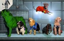 Avengers version chiens, ou «La Revanche de Lokitty»