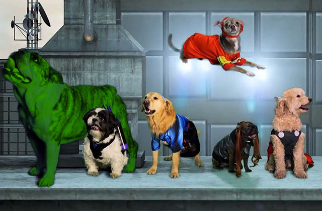 Avengers version chiens, ou « La Revanche de Lokitty »