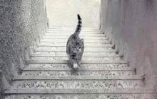 Le chat monte-t-il ou descend-t-il les escaliers ? Ou le retour de l'illusion polémique