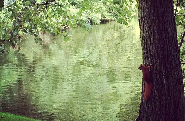 copenhague-carte-postale-ecureuil
