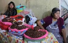 L'État d'Oaxaca, sa diversité et ses luttes — Carte postale du Mexique
