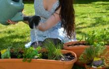 Comment faire pousser des herbes aromatiques chez soi?