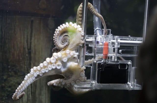 Rambo le poulpographe, ou quand une pieuvre vous prend en photo