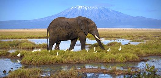 tanzanie-les-reserves-du-kilimandjaro-PAAJROM10-00055612