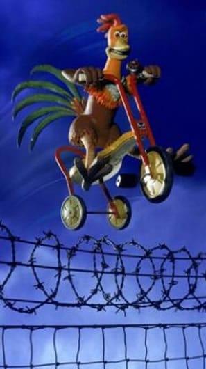 chiken run motocycle fence