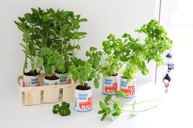 DIY_minijardin_plantes_aromatiques_pots