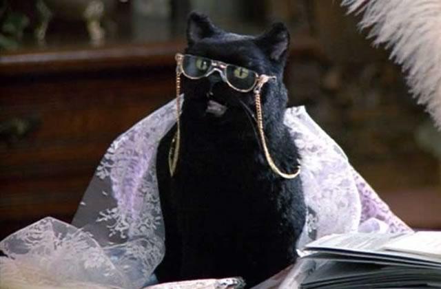 Comment survivre en travaillant avec un chat?