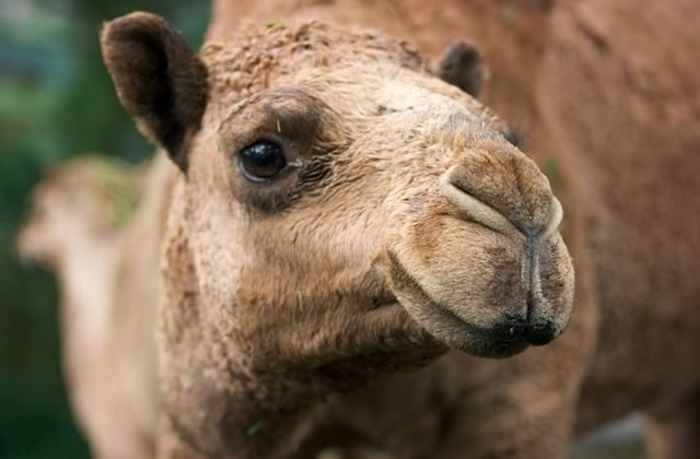 Une culotte en silicone pour éviter le camel toe — WTF slip