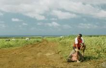 L'Île Maurice, entre multiculturalité et communalisme — Carte Postale