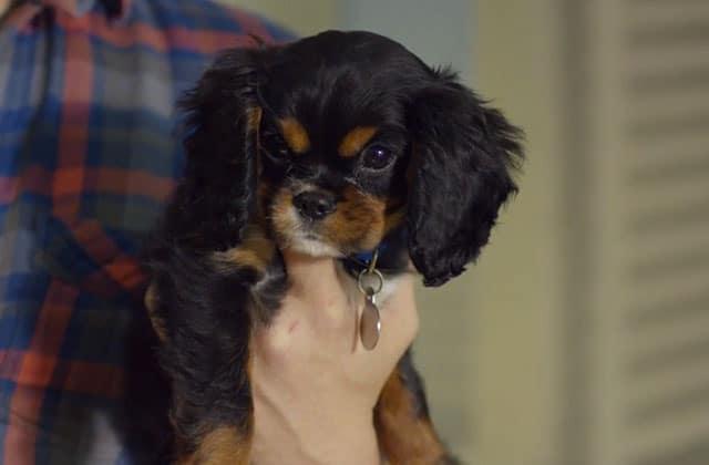 «Puppyhood», la publicité qui vous fera adopter un petit chien
