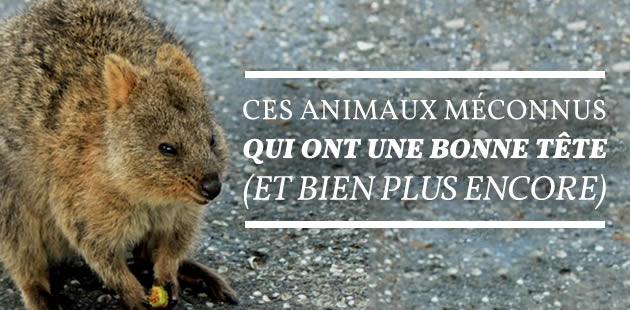 big-animaux-meconnus-bonne-tete
