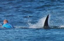 Un champion de surf face à un requin en pleine compétition