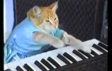 Une exposition sur les chats de l'Internet va ouvrir à New York!