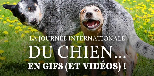 big-meilleurs-gifs-videos-de-chiens-journee-chien