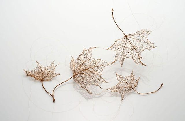 Des feuilles d'arbre recréées avec… des cheveux