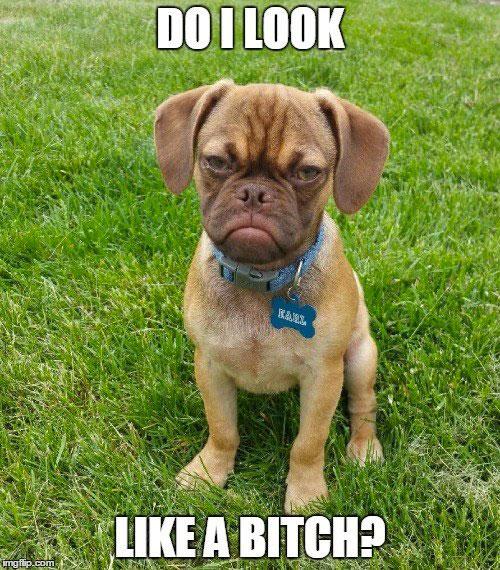 grumpy-dog-meme