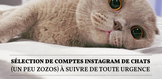 big-comptes-instagram-chats
