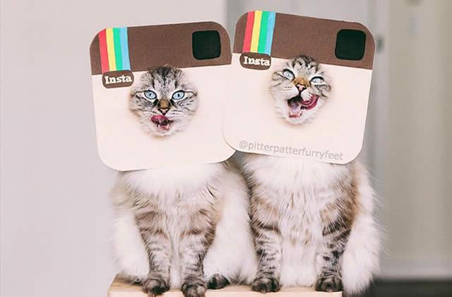 Sélection de comptes Instagram de chats (un peu zozo) à suivre #2
