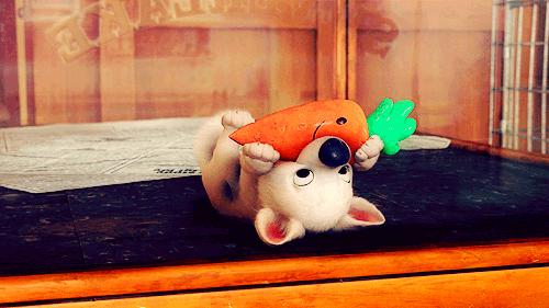 volt-star-malgre-lui-carotte