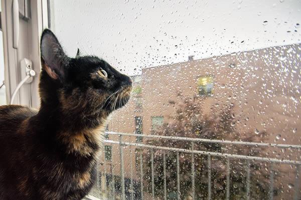 pluie-tombe
