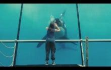 SeaWorld San Diego annonce la fin des acrobaties d'orques