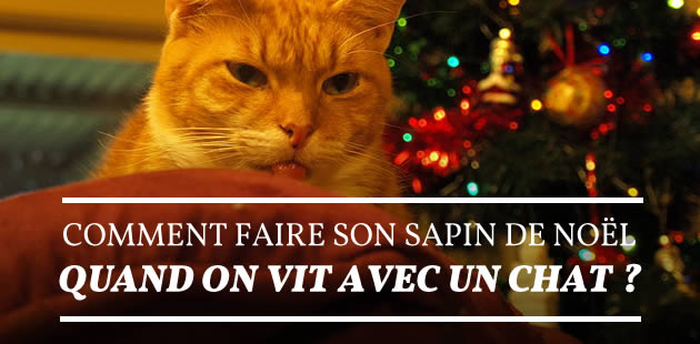 Chat page 1 - Quand doit on faire le sapin de noel ...