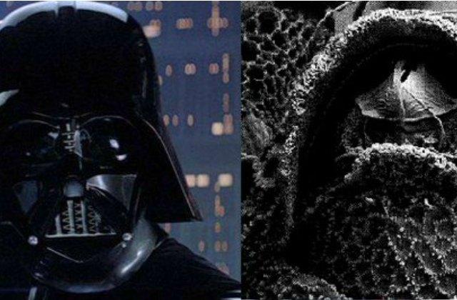 Des insectes baptisés en l'honneur de «Star Wars» et autres classiques
