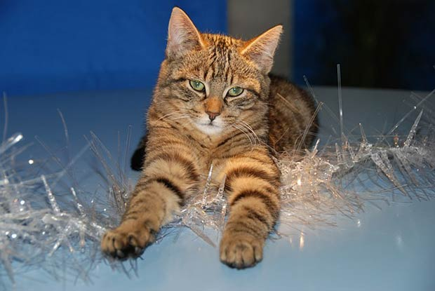 Sapin De Noel Comment Faire Quand On A Un Chat
