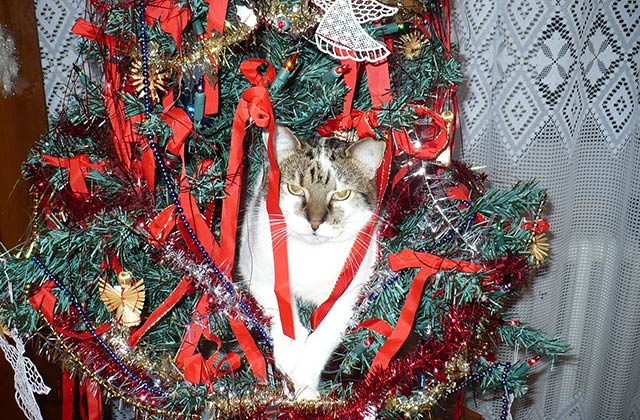 Comment faire son sapin de Noël quand on vit avec un chat ?