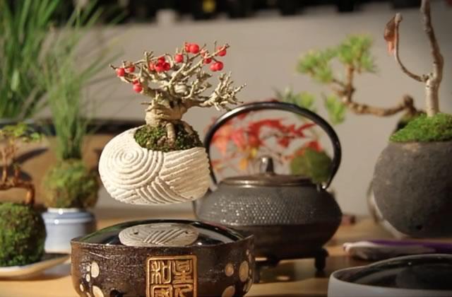 Le bonsai flottant, meilleur objet déco du monde