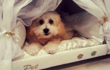 Un matelas avec panier pour chien intégré, pour faire de beaux rêves avec son ami à quatre pattes