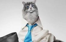 Kevin Spacey devient un chat dans l'étonnant «Mr Fuzzypants»!