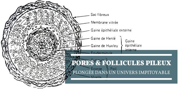 Pores & follicules pileux:plongée dans un univers impitoyable