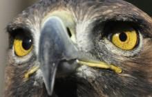 Trois oiseaux flippants bien loin des moineaux jolis