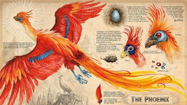 Phoenix-Harry-Potter-chambre-secrets-livre