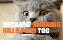 Arrêtez de fumer, sauvez un chaton !