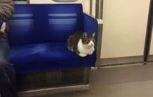 Au Japon, il y a de tout dans le métro, même un chat qui se prend pour un humain