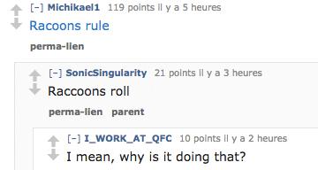 reddit14-raccoon