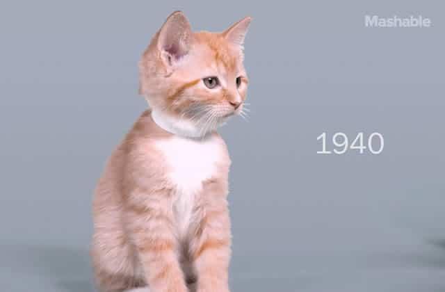 «100 Years of Beauty» des chatons, par: un chaton (roux)