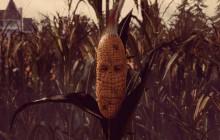 «Maize», le jeu vidéo qui vous met dans la peau… d'un épis de maïs