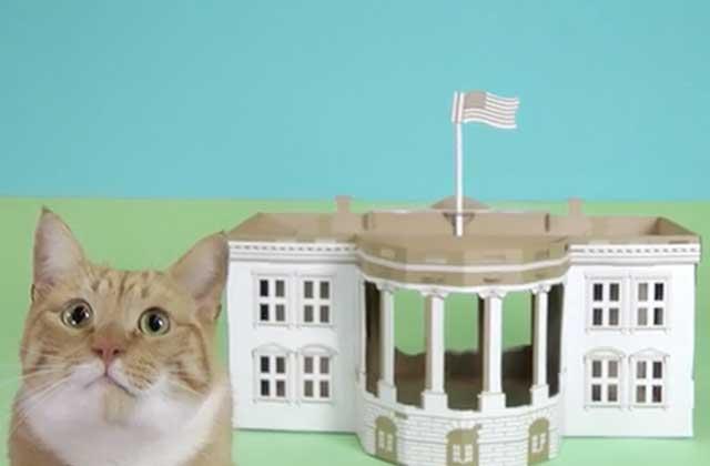 Poopy Cat lance de jolies maisons (en carton) pour vos animaux de compagnie!